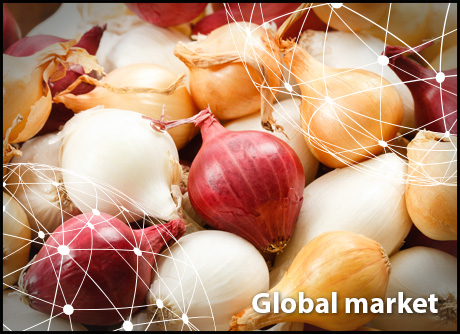 OVERVIEW GLOBAL ONION MARKET - Fruit Ukraine