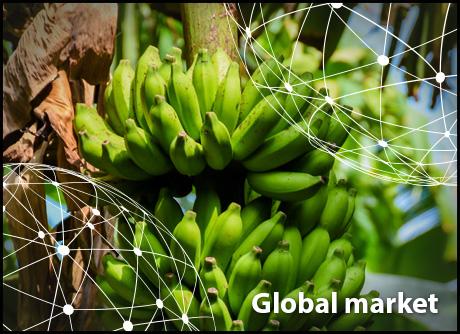 OVERVIEW GLOBAL BANANA MARKET - Fruit Ukraine
